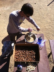 Acorn meal can also be ground by hand.