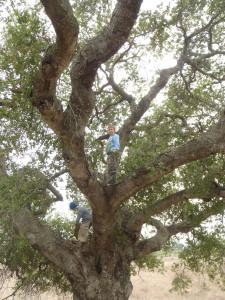 Boys-In-Trees